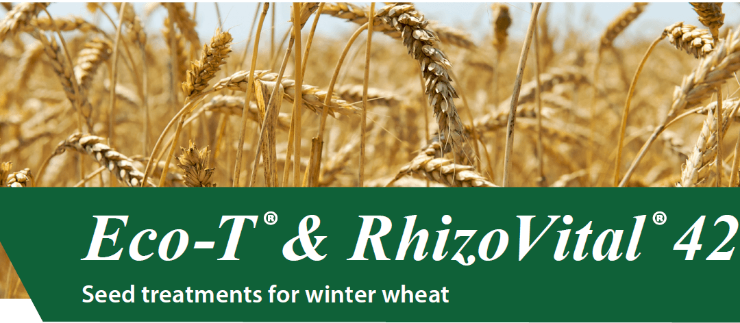Eco-T & Rhizovital seed treatments for Winter Wheat