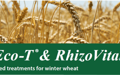 Eco-T & Rhizovital seed treatments for Winter Wheat