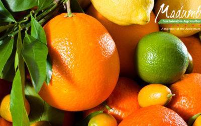 Cryptex® & Eco-Bb® Biological pest control for Citrus