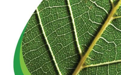 International Year of Plant Health 2020 – IYPH