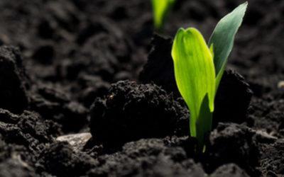 Madumbi Aims To Change The Way We Grow Food