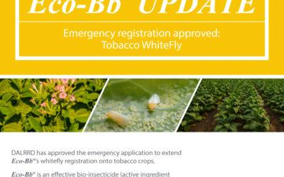 Eco-Bb Update